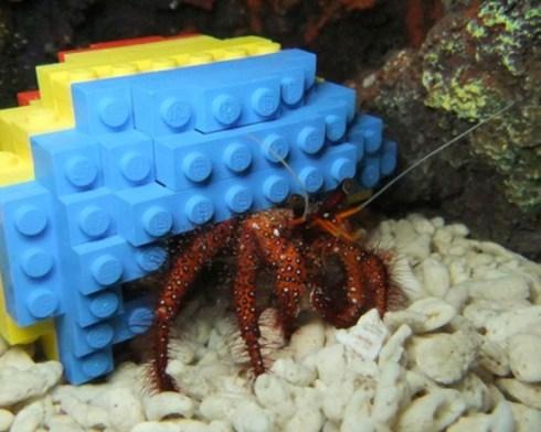 lego hermit crab